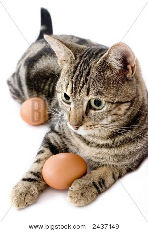 Cat Playing With Egg
