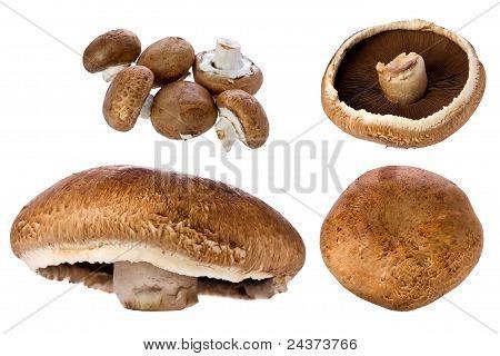 Portobello Mushroom (agaricus Bisporus)
