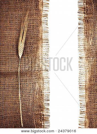Frontera de trigo