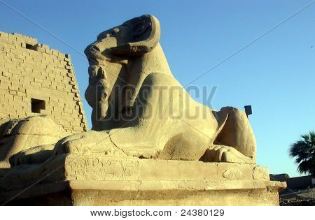 The Head Sphinx