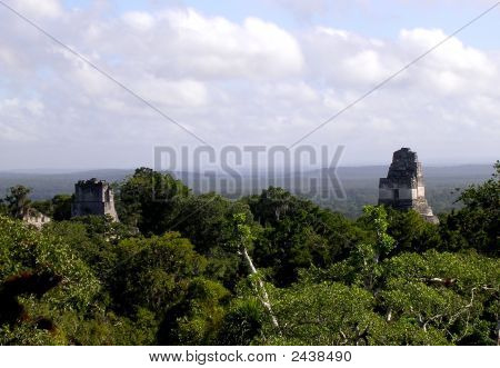 Skyline Of Tikal Ruins