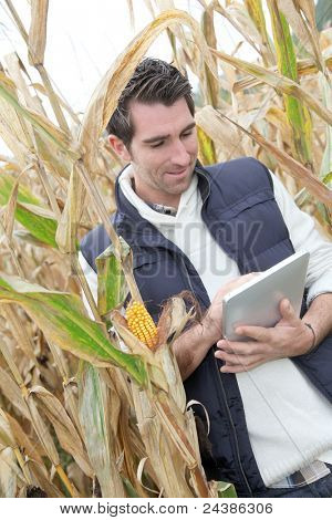 Agronomist analysing cereals with electronic tablet