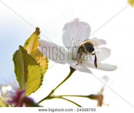 The Delving of the Bee