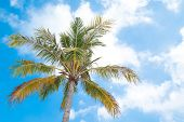 Beautiful Coco Palms In Summer Time. Concept Travel, Holiday And Vacation. poster