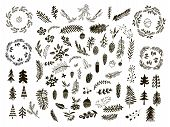 Set Of Hand Drawn Christmas Elements.hand Drawn Conifers: Fir, Larch, Juniper, Pine, Spruce  In Vect poster