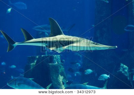 a large grey shark