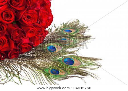 Bunch of red roses and peacock feathers isolated