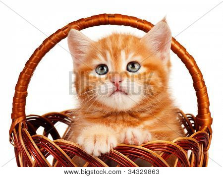 Cute little red kitten in a wicker basket isolated on white background