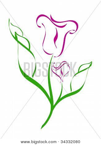 vector illustration of a Calla Lilies silhouette