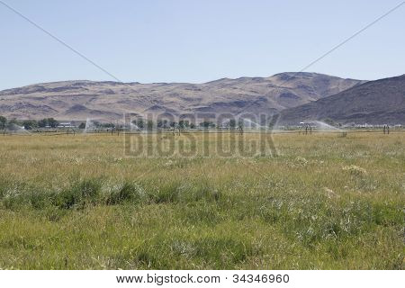Agriculture Pasture Crop Irrigation