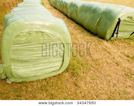 Haylage bales left outdoors for fermentation