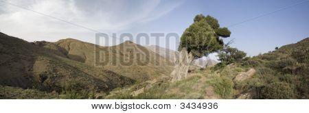 Cypress Panorama
