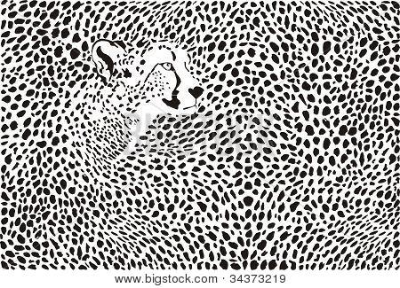 Pattern cheetahs background
