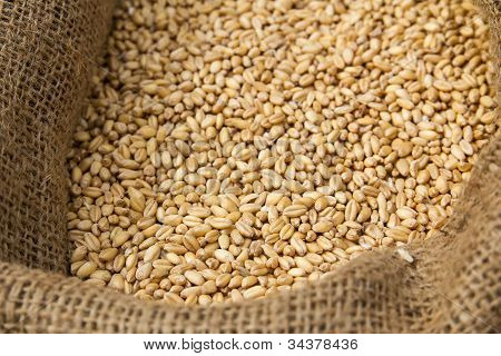 Corncrop In Sack