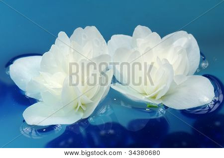 Pretty White Jasmine Flowers Floating On Water