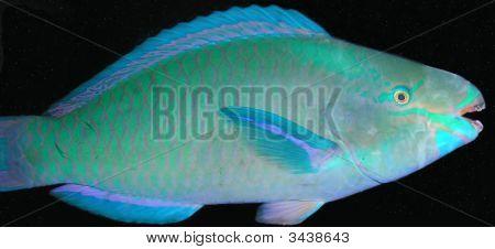 Lächelnd tropischer Fisch
