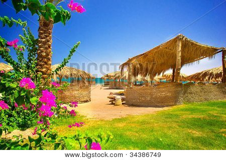 Fine Flowers And Exotic Beach.