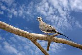 A beautiful dove sitting on branch