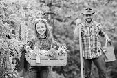 Transplanting Vegetables From Nursery Gardening Center. Plant Veggies. Planting Season. Family Dad A poster
