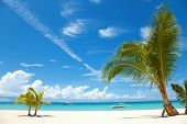 stock photo of cebu  - Two palm trees on a beach in Bantayan island Philippines - JPG