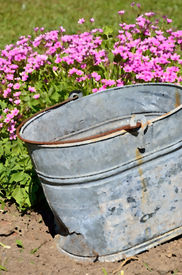 picture of yesteryear  - The soft pink flowers by an old metal pail contrast with the nostalgia of days gone by - JPG