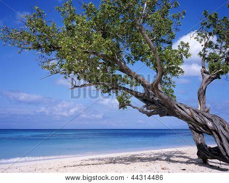 Beach At Cuba
