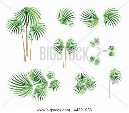 Isometric Of Lady Palm Tree On White Background