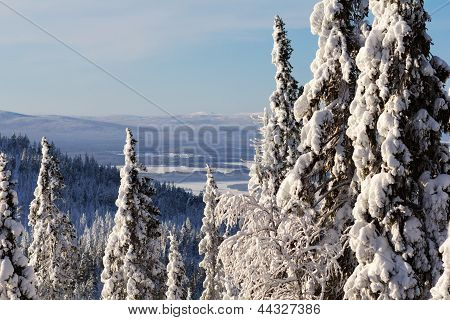 Winter Forest Landscape, Kola Peninsula, Russia