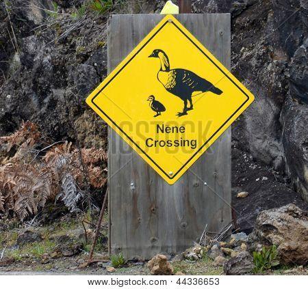 Nene Crossing Sign Seen In Hawaii