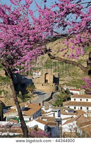Arabic tower and pink blossom, Antequera, Spain.