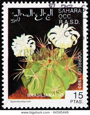 Postage Stamp Sahara 1993 Gymnocalycium, Cactus