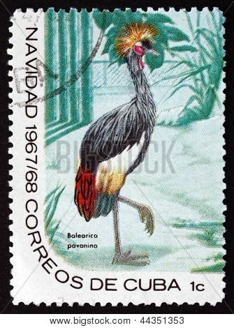 Postage Stamp Cuba 1967 Black Crowned Crane, Bird