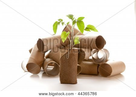 Empty Toilet Paper Roll Made Into A Planter