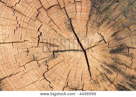 Cut Of The Kiln-dried Wood