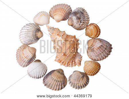 Close-up Seashells On White