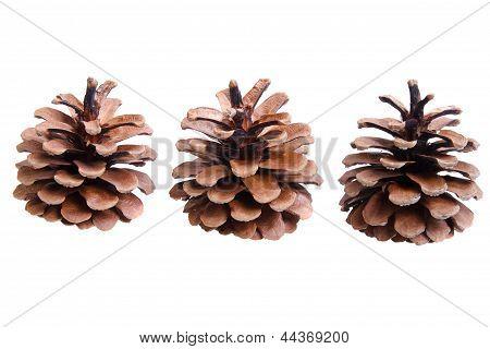 Three Fir Cones On A White