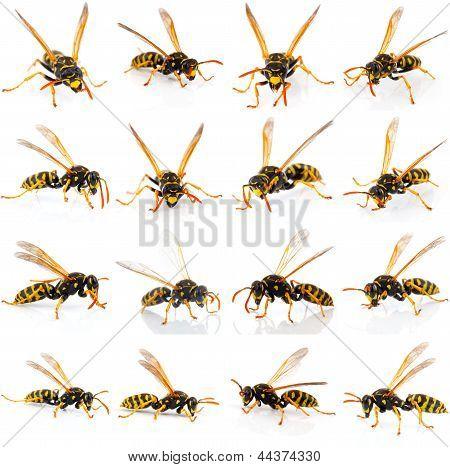 Conjunto de vespa isolado no fundo branco