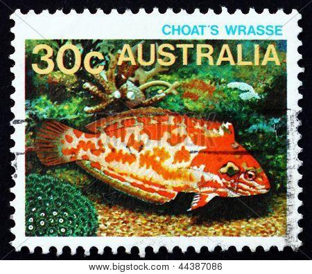 Postage Stamp Australia 1984 Choati Leopard Wrasse, Fish