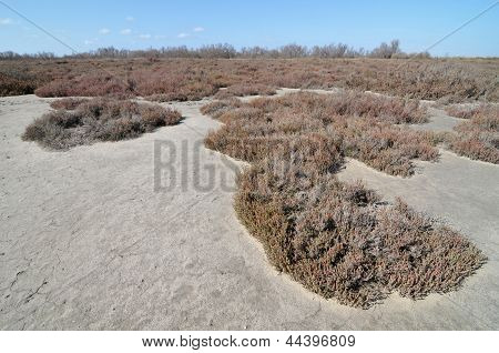 Dry field in Camargue