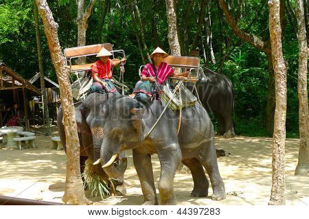 A mahouts in charge of  elephants waiting for passengers  at the Siam Safari Elephant Camp in Phuket