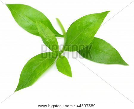 Henna leaves over white background