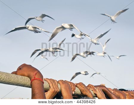 Holding While Gulls Make Fly Past