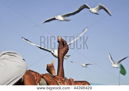 Feeding Seagulls On Ferry India