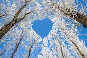 stock photo of heart  - Winter landscape - JPG