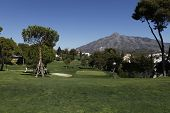 Aloha  golf course, Marbella, Spain