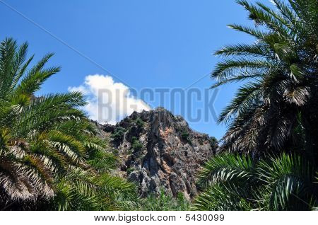 Palm Trees And Mountains At Preveli Beach