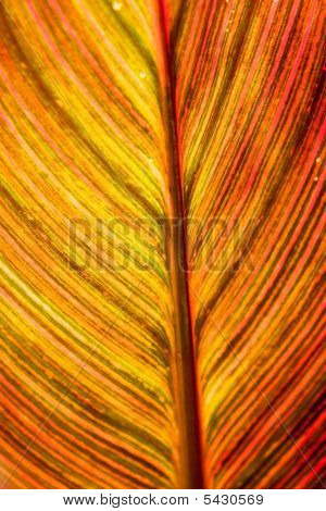 Red Brown Leaf Texture