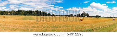Panorama_mown Field
