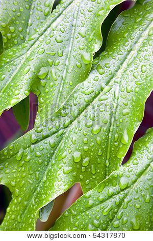 Abstract Closeup Of Green Plant Leaf With Water Droplets