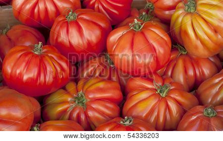 Tomato background in the market of France.
